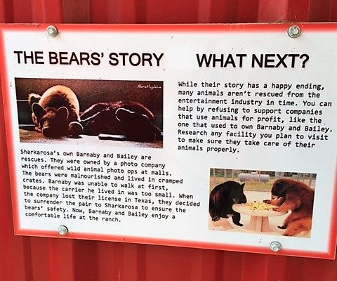 bears in north texas