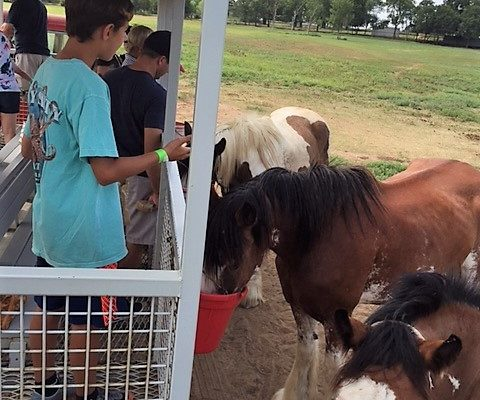 horses at Sharkarosa