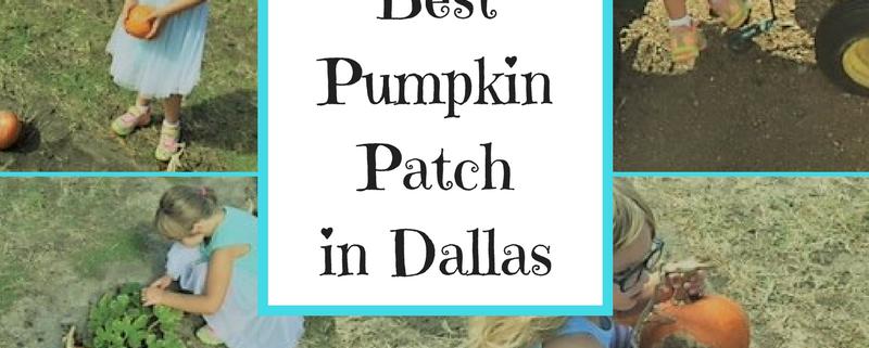 best pumpkin patch in dfw