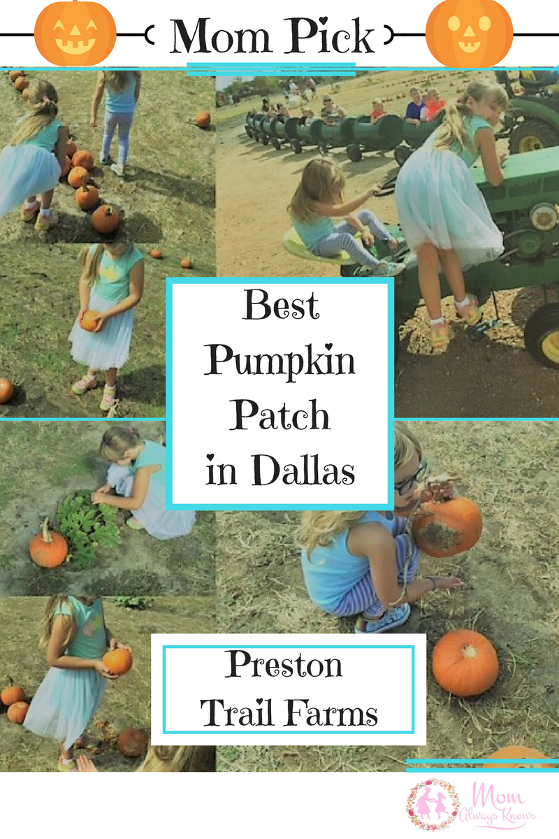 Mom Pick-Best Pumpkin Patch in Dallas is open year round- Preston Trail Farms