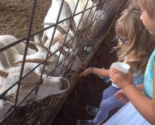 petting zoo in north texas