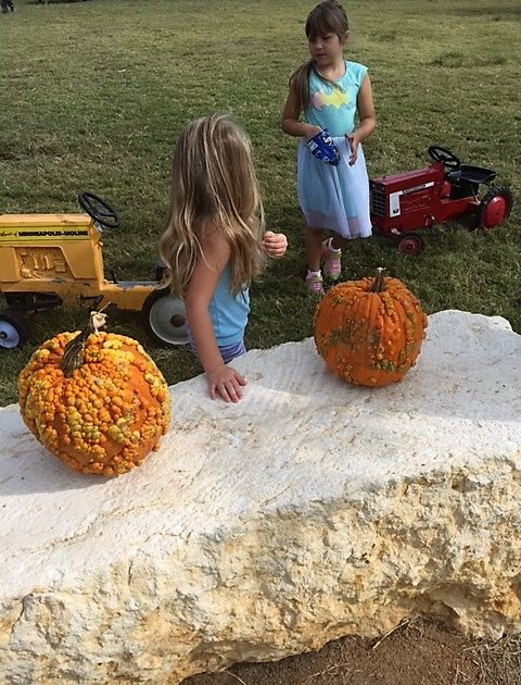 big orange pumpkin farm dfw