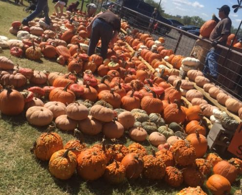 best pumpkin patch in dfw