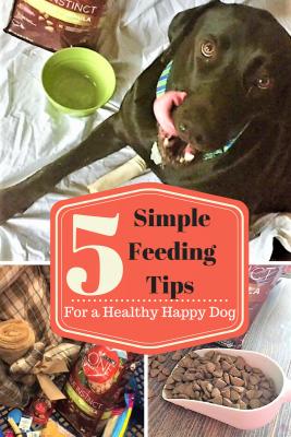5 Simple Feeding Tips for a Healthy Happy Dog