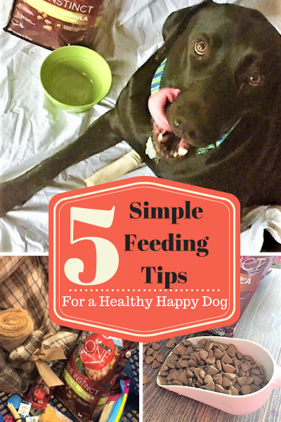 5 Simple Feeding Tips for a Healthy Happy Dog