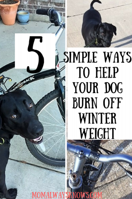 5 Simple Ways to Help Your Dog Burn Off Winter Weight
