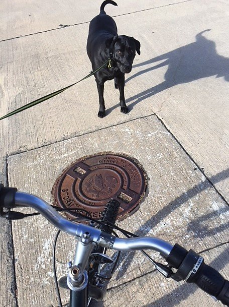 bike riding with dog