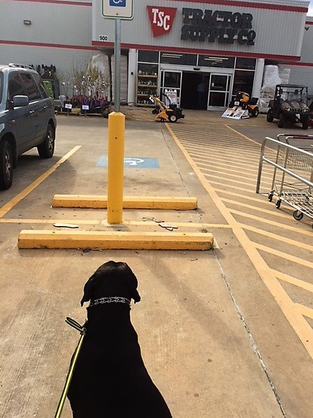 dog at tractor supply store