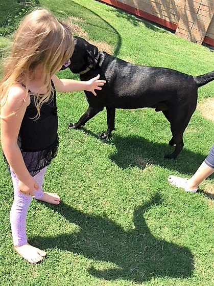 girl playing with dog outside