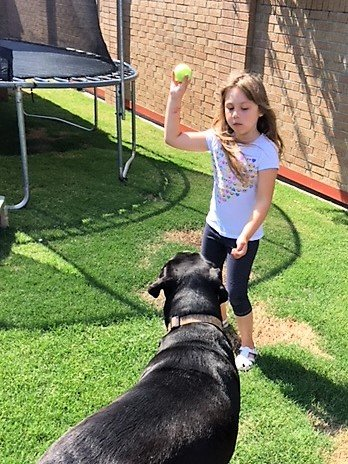 girl playing fetch with dog