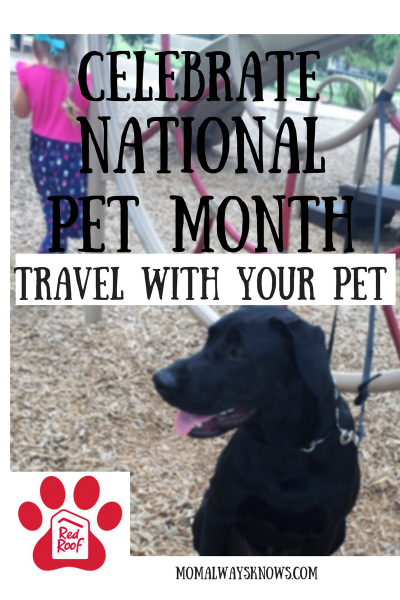 Celebrate National Pet Month in May by Traveling with Your Pet