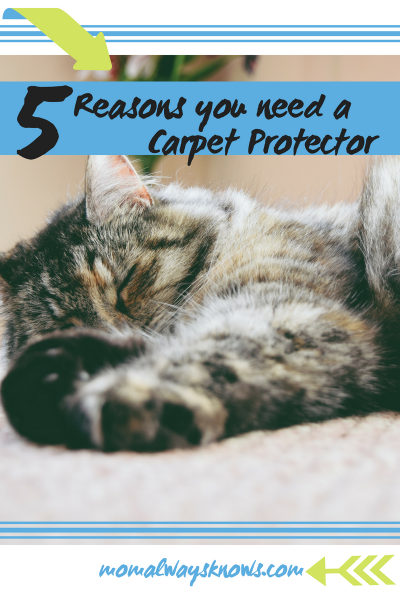 5 Reasons You Need to Use a Carpet Protector