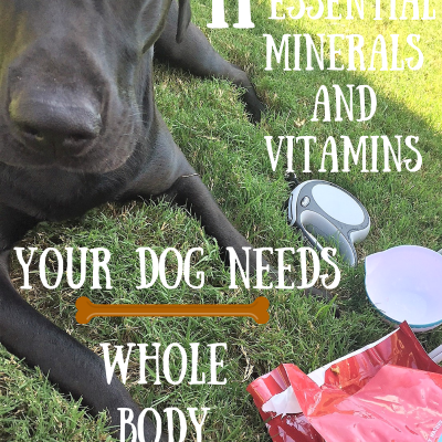 Whole Body Health: 11 Essential Minerals and Vitamins Your Dog Needs