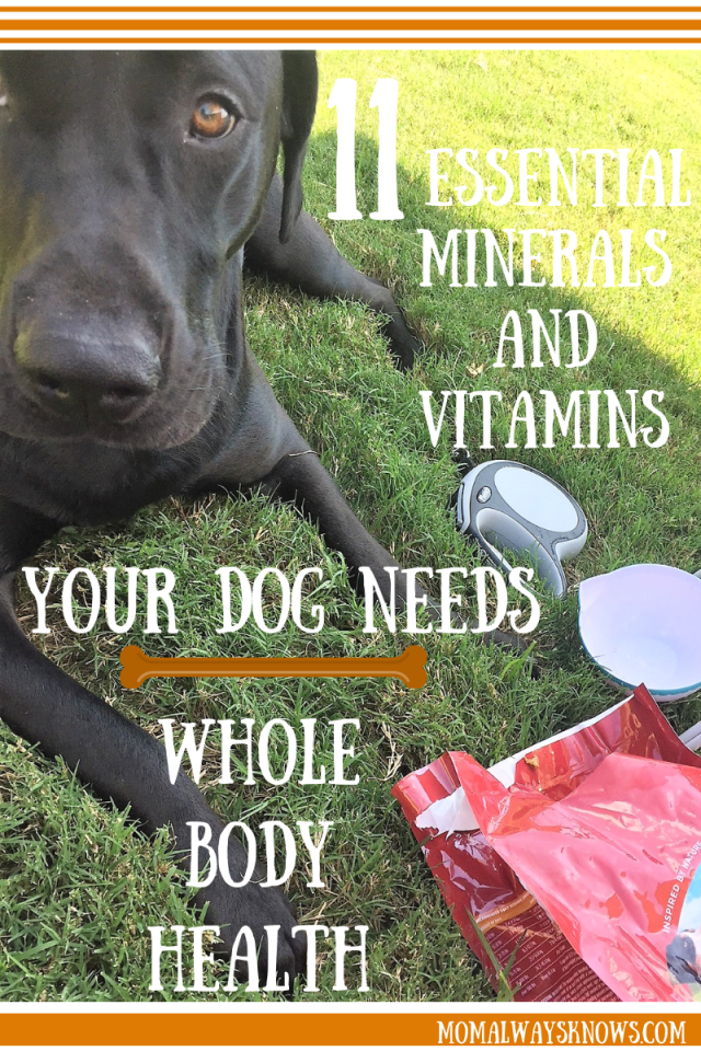 purina dog food coupons