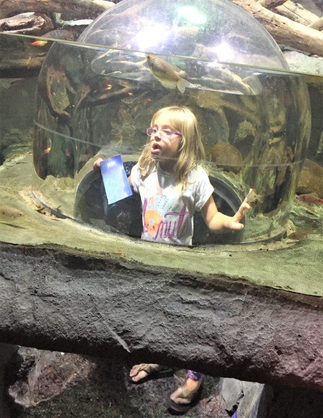ocean tunnel sealife aquarium