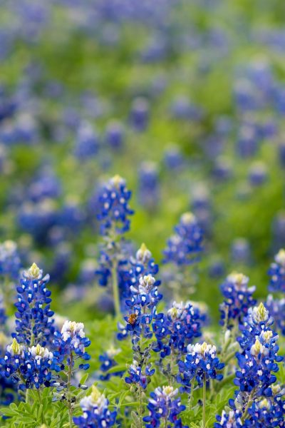 Visit The Best Attractions In Plano Texas This Year