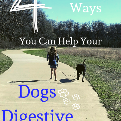 4 Easy Ways You Can Help Your Dogs Digestive Health Today