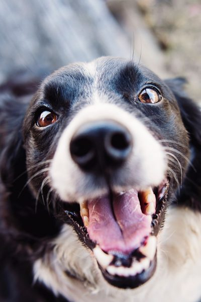 Is Pet Insurance Really Worth It?