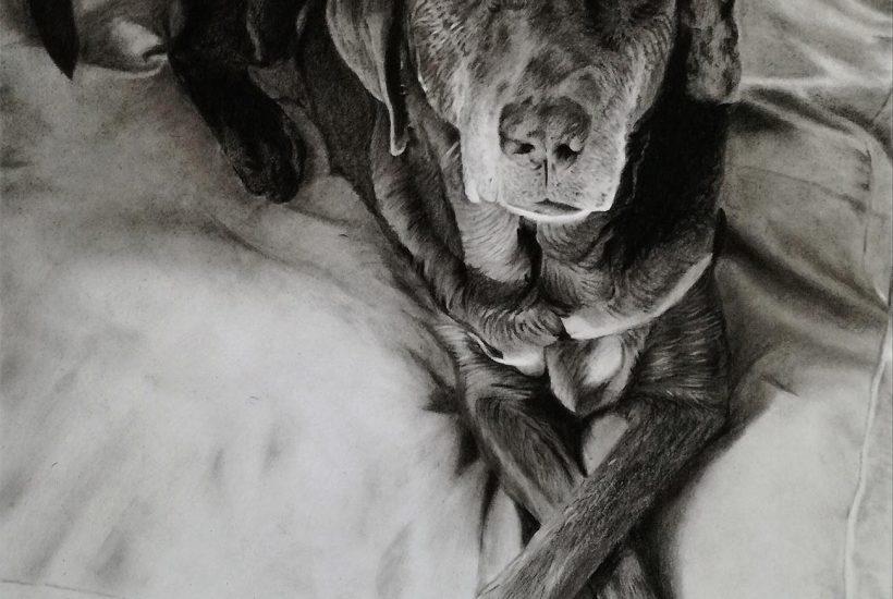 buy custom pet portrait